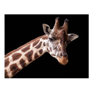 Portrait de girafe - carte postale