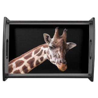 Portrait de girafe sur le noir - plateau de