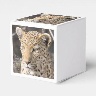Portrait de léopard ballotin de dragées