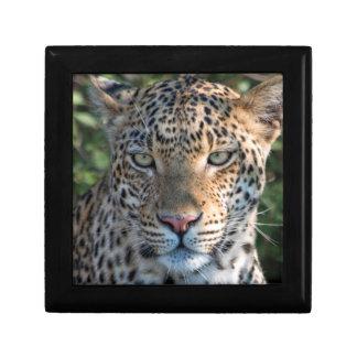 Portrait de léopard, fin boîtes à babioles