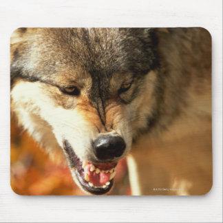 Portrait de loup grognant tapis de souris