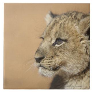 Portrait de petit animal de lion (Panthera Lion), Grand Carreau Carré