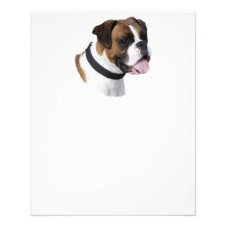 Portrait de photo de chien de boxeur de faon prospectus