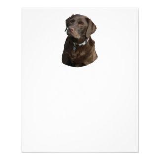 Portrait de photo de Labrador de chocolat Prospectus 11,4 Cm X 14,2 Cm