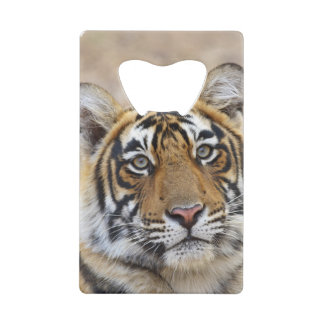 Portrait de tigre de Bengale royal, Ranthambhor
