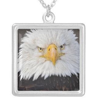 Portrait d'Eagle chauve, Eagle chauve en vol, Collier