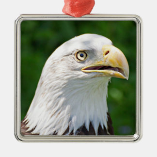 Portrait d'Eagle chauve Ornement Carré Argenté