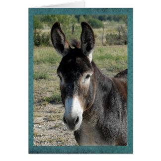 Portrait d'un burro carte de vœux