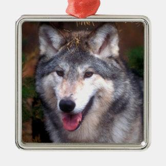 Portrait d'un loup gris ornement carré argenté