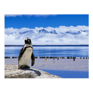 Pose du pingouin carte postale