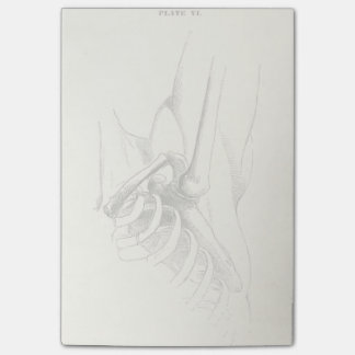 Post-it® Articulation de l'épaule vintage de l'anatomie  