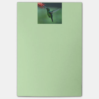 Post-it® Notes de post-it de colibri