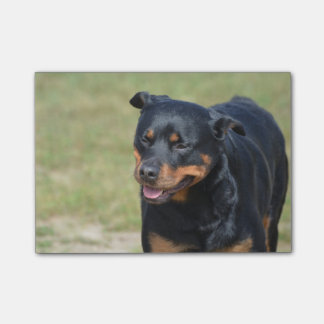 Post-it® Rottweiler sans astuce