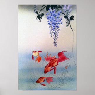 Poster 金魚と藤, poisson rouge de 小原古邨 et glycines, Ohara
