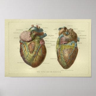 Poster 1886 copies humaines vintages d'anatomie de coeur
