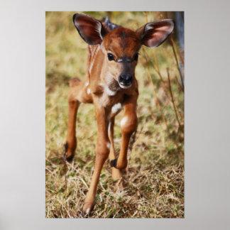 Poster 3 vieux cerfs communs de Nyala de bébé de jour