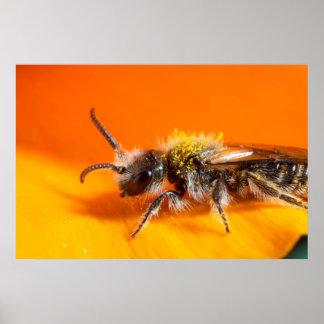 Poster Abeille pollinisant une fleur