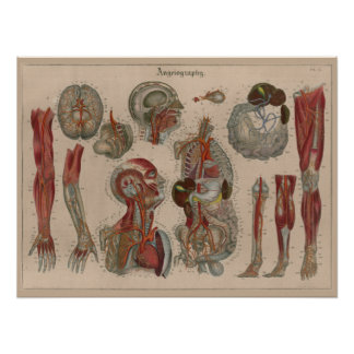 Poster Affiche 1837 d'art d'anatomie de sang d'artères de