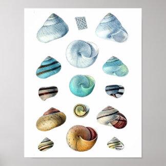 Poster Affiche bleue vintage de coquillages
