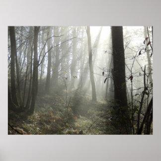 Poster Affiche de brume de matin de région boisée