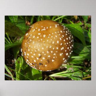 Poster Affiche de champignon de casquette de panthère