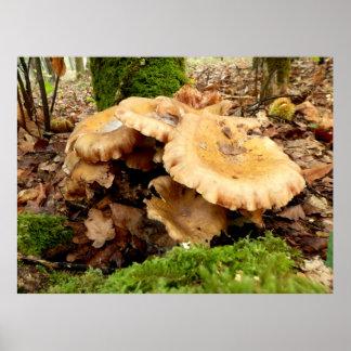 Poster Affiche de champignon de giganteus de