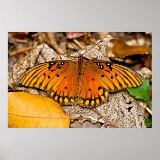 Poster Affiche de chauffage d'ailes de papillon de Golfe