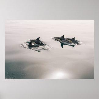 Poster Affiche de dauphins communs