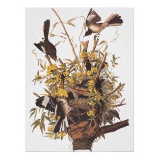 Poster Affiche de famille du moqueur d'Audubon