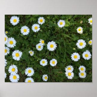 Poster Affiche de fleur de marguerite