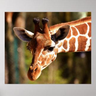 Poster Affiche de girafe - animaux de zoo de faune de