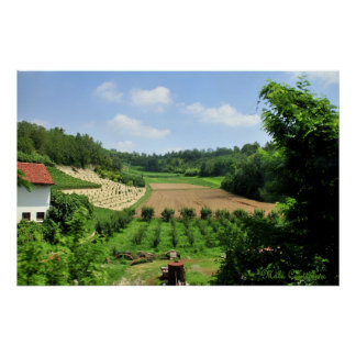 Poster Affiche de vignobles et de champs de Piémont