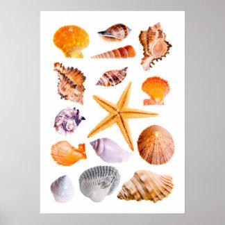 Poster Affiche d'étoiles de mer et d'impression de