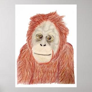 Poster affiche d'orang-outan