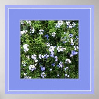 Poster Affiche florale de belle verveine bleue