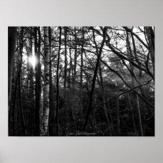 Poster Affiche - forêt, lever de soleil, noir et