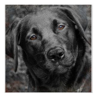 Poster Affiche noire de chien de Labrador