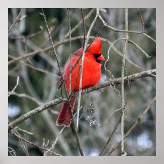 Poster Affiche rouge royale du cardinal 24x24