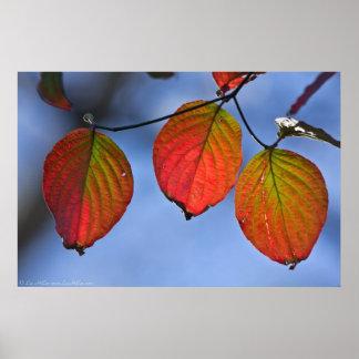 Poster Affiche vibrante de trio de feuille d'automne