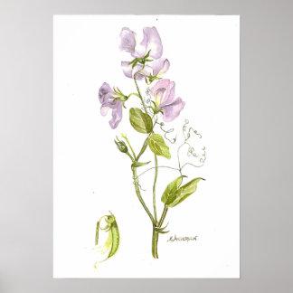 Poster Affiche violette sensible de pois doux de couleur