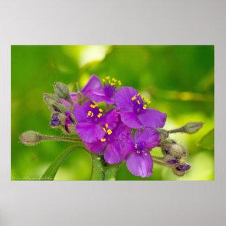 Poster Affiche violette vibrante de fleur sauvage de