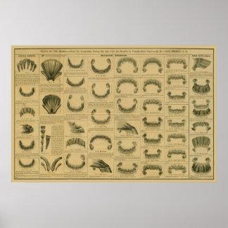 Poster Âge de cheval par l'affiche dentaire d'anatomie de