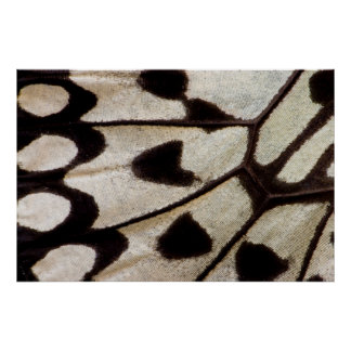 Poster Aile noire et blanche de papillon
