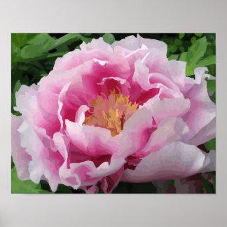 Poster Amende rose d'aquarelle de pivoine florale