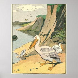 Poster Animal illustré par livre d'histoire de pélican