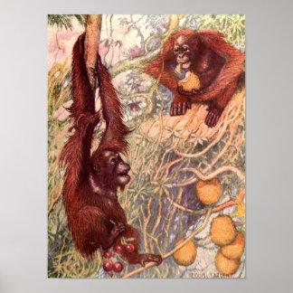 Poster Animal sauvage vintage, orangs-outans par Louis