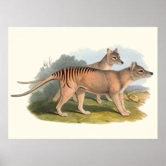 Poster Animaux de l'Australie le tigre tasmanien