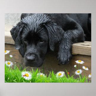 Poster Appréciez les petites choses - Labrador noir