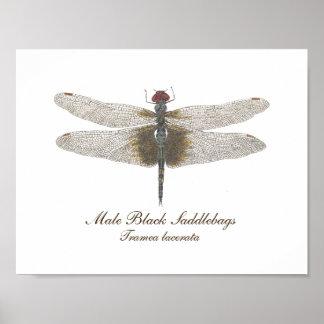 Poster Aquarelle noire masculine de libellule de sacoches