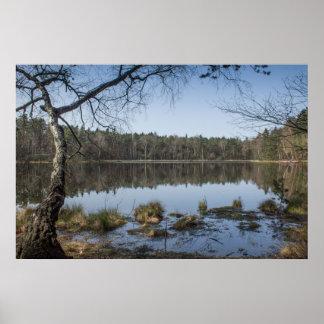 Poster Arbre de bouleau au-dessus d'affiche de lac